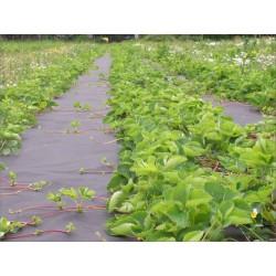 Agroplėvelė 50 g/m2 juoda 1,6 m x 250 m